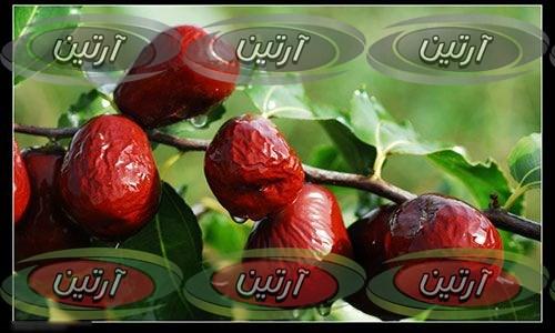 خرید عناب در مشهد