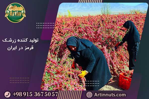 تولید کننده زرشک قرمز در ایران