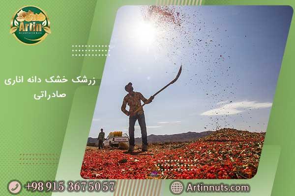 زرشک خشک دانه اناری صادراتی