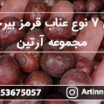 فروش ۷ نوع عناب قرمز بیرجند در مجموعه آرتین