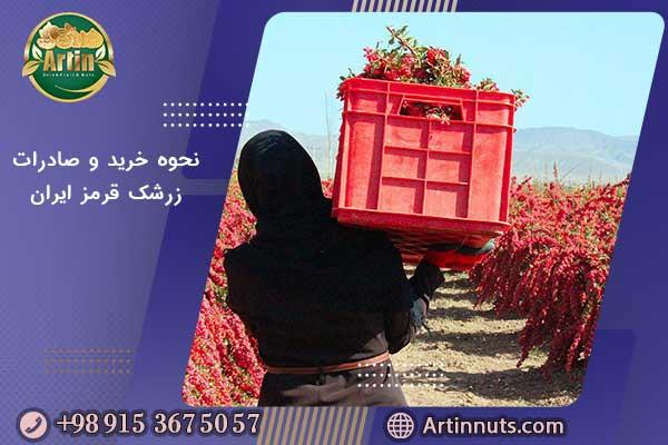 نحوه خرید و صادرات زرشک قرمز ایران