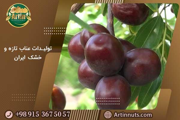 تولیدات عناب تازه و خشک ایران