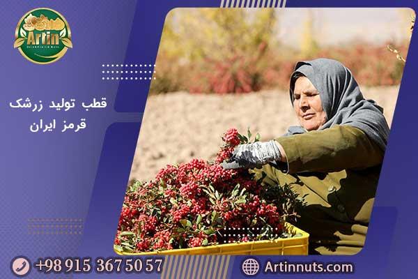 قطب تولید زرشک قرمز ایران