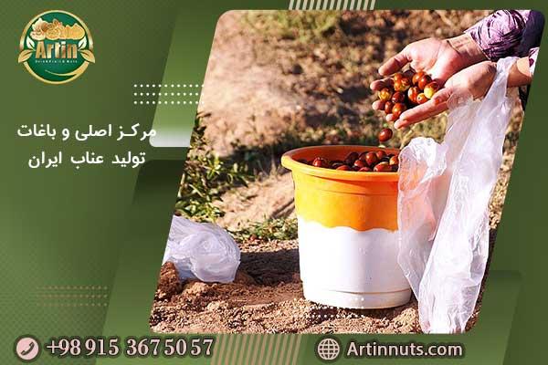 مرکز اصلی و باغات تولید عناب ایران