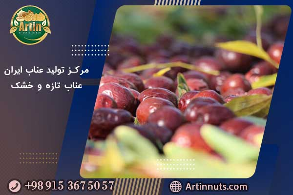 مرکز تولید عناب ایران | عناب تازه و خشک