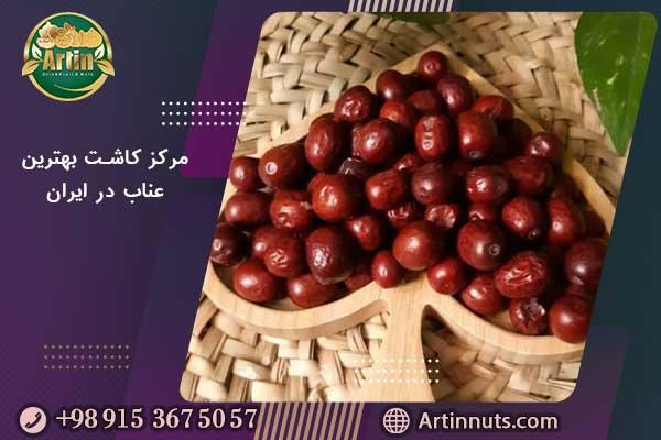 مرکز کاشت بهترین عناب در ایران