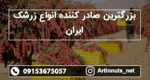 بزرگترین صادر کننده انواع زرشک ایران