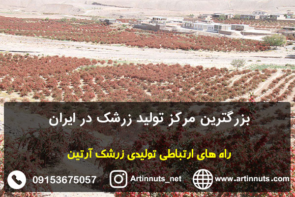 بزرگترین مرکز تولید زرشک در ایران