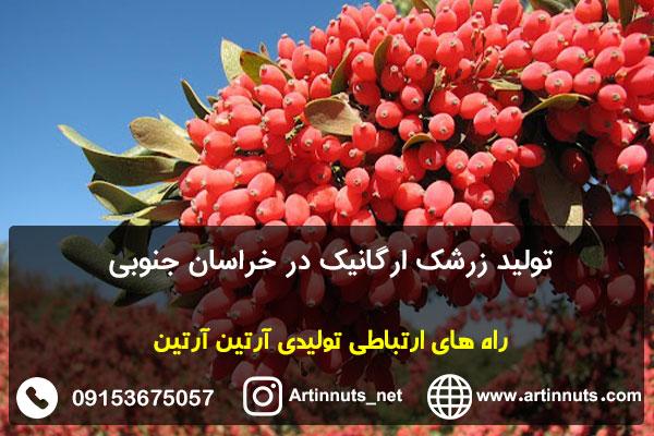 تولید زرشک ارگانیک در خراسان جنوبی