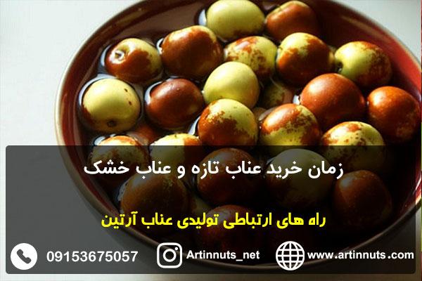 زمان خرید عناب تازه و عناب خشک