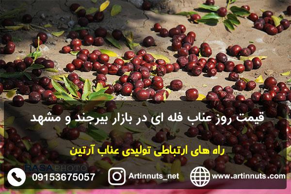 قیمت روز عناب فله ای در بازار بیرجند و مشهد