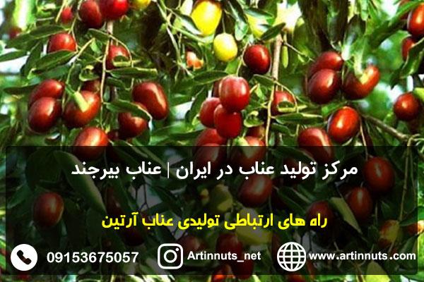 مرکز تولید عناب در ایران | عناب بیرجند