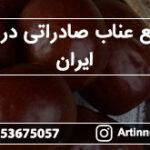 توزیع عناب صادراتی درشت ایران