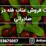 قیمت فروش عناب فله در بازار صادراتی